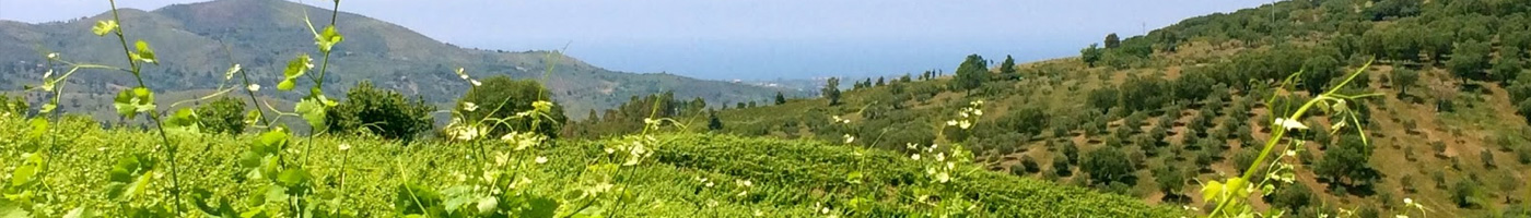 Consorzio Vini Salerno